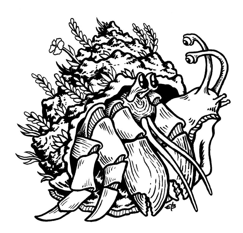 snail_hermit_oneshell_ink2