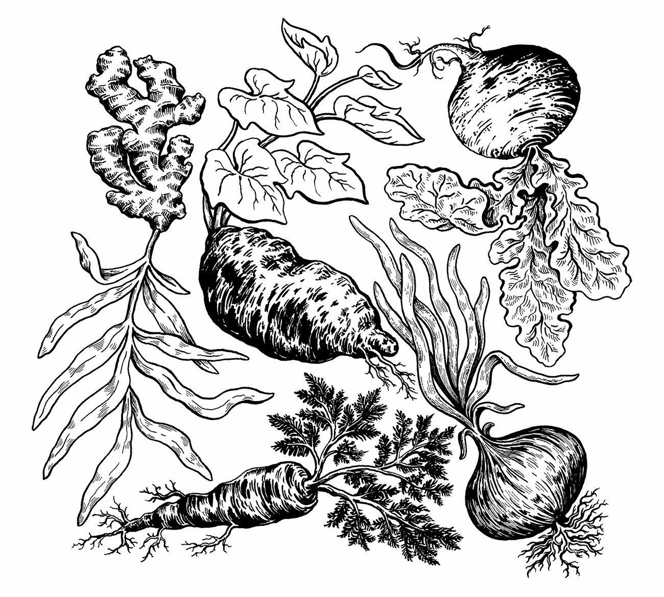 root-vegetables-web